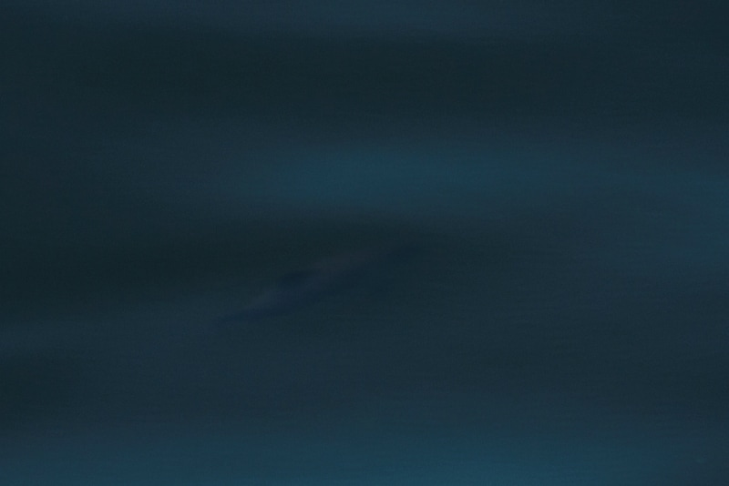 Bruinvis onder water (foto Ernst Schrijver)