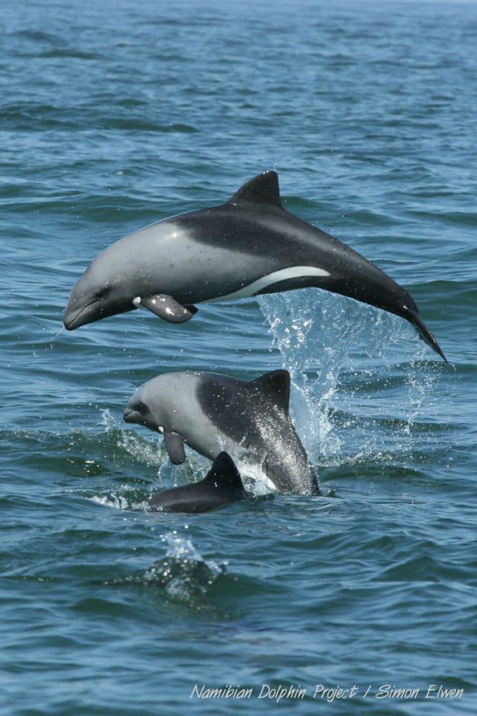 Heaviside dolfijnen