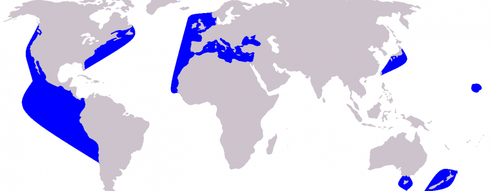 Cetacea_range_map_Short-beaked_Common_Dolphin