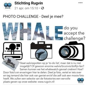 Whale Challenge Rugvin 2020
